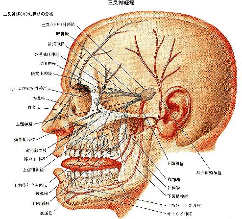 神経痛 歯 三叉